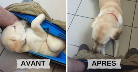 Ce chien passe son temps à suivre son maître aux toilettes, et c'est hilarant ! (Photos)