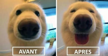 Avant/Après : 20 adorables chiens et chats qui réagissent à leur surnom quand leur maître les appelle !