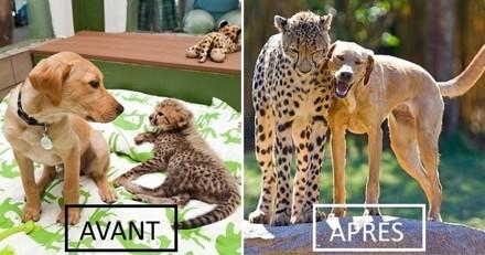 Avant/Après : 15 duos d'animaux qui ont grandi ensemble et vont vous faire fondre
