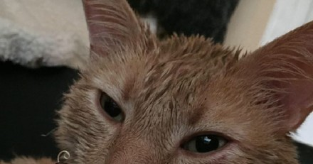 Ils voient leur chat rentrer chez eux et leur sang se glace en regardant ses moustaches