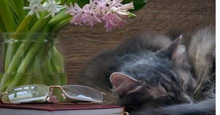 Comment soigner son animal de compagnie avec les fleurs de Bach ?