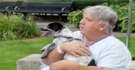 Hospitalisé, cet homme risquait de perdre son chien, deux infirmiers ont décidé de l'aider (Vidéo)