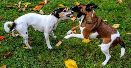 La chronique 100% animaux de Sandrine Arcizet : que faire en cas d'agressions entre chiens ?