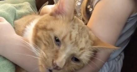 Une fillette chante une chanson pour un chaton mourant : la vidéo brise le cœur de millions de personnes