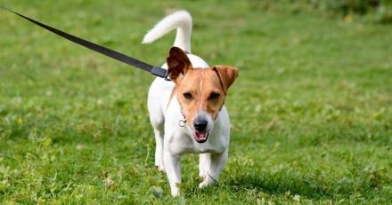 WOOG : une application mobile pour des balades avec votre chien au top !