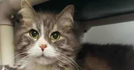 Ce chat a perdu son boulot, mais il a trouvé une famille pour la vie
