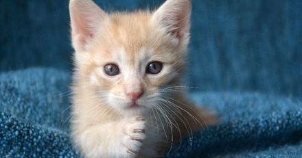 Après l'attentat à Barcelone, les chats envahissent Twitter pour une très bonne raison
