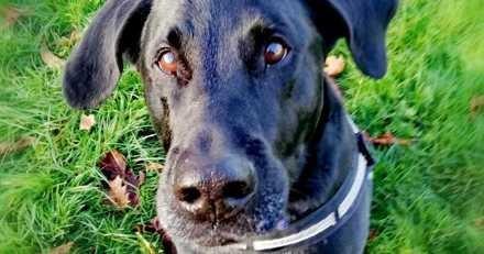 Ce chien pleure tous les jours la perte de ses maîtres : ils l'ont abandonné deux fois sans aucun scrupule