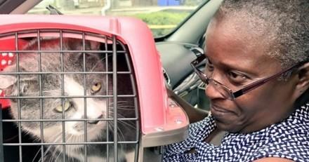 Un chat sauve ses maîtres de l'effondrement de leur maison