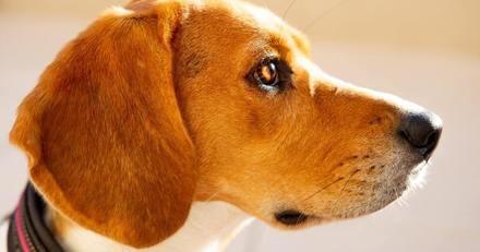 La maison est en flammes et son maître dort, ce chien agit en vrai héros pour le sauver