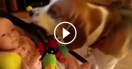 Ce chien vole les jouets du bébé avant de s'excuser de la plus belle des façons (Vidéo du jour)