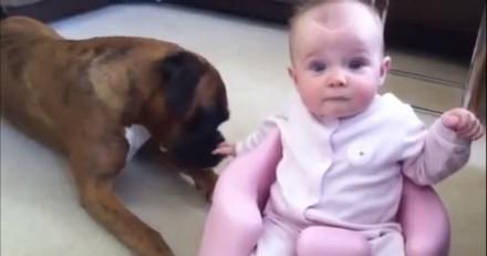 Ils laissent leur bébé près de leur chien : ce qui se passe ensuite est extraordinaire (Vidéo)