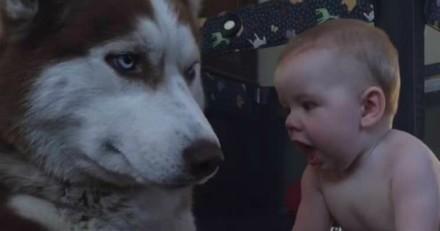 Le bébé s'approche du chien pour lui dire bonjour, sa réaction est incroyable (Vidéo)