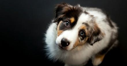 Top 20 des races de chiens préférées des Français en 2018