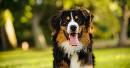 Top 20 des races de chiens préférées des Français en 2020