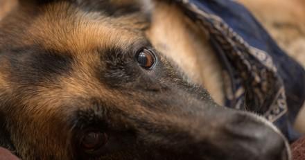 Il enfermait son chien dans sa camionnette pour qu'il la surveille