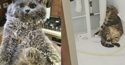 10 chats pris sur le fait accompli après avoir fait une bêtise (Photos)