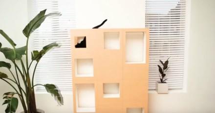 Il invente un concept absolument génial pour son chat (Vidéo)