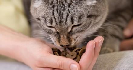 Comment bien nourrir son chat stérilisé ?