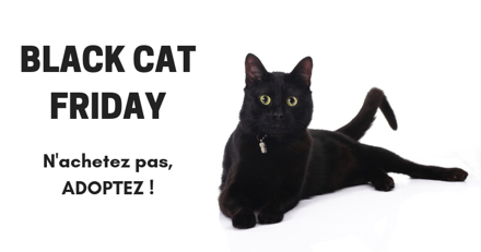 Black Friday, rien à cirer ! Chez Wamiz, c'est le Black CAT Friday !