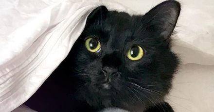 Ce chat noir s'insère tranquillou dans des scènes de films cultes, et le résultat est impressionnant