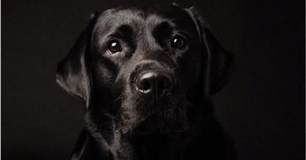 Cette photographe fait de magnifiques portraits de chiens noirs pour les aider à être adoptés
