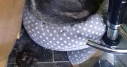 Ils rentrent chez eux, trouvent un autre animal dans le panier de leur chat et sont choqués !