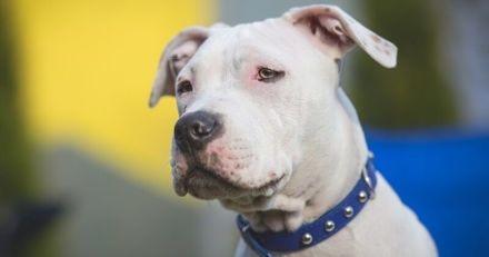 Dans cette vidéo touchante, un chien perdu est réuni avec son maître qui vit à la rue