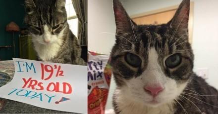 Adopté à plus de 18 ans, ce chat fête désormais tous ses demi-anniversaires