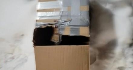 Une femme sort nourrir les chats errants : elle trouve une boite scotchée et se pétrifie en l'ouvrant