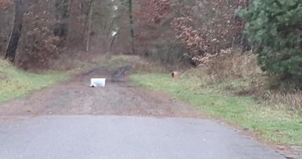Elle voit une boite en plastique abandonnée dans les bois : un cri en sort qui lui glace le sang