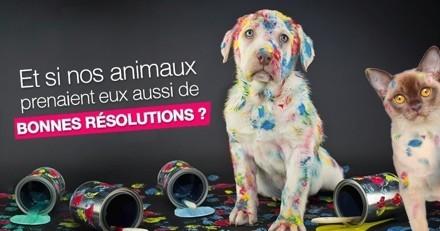 Les bonnes résolutions de nos chiens et chats pour 2021