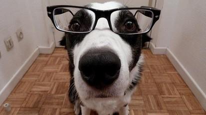 Top 10 des races de chiens les plus intelligentes