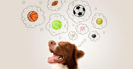 Les chiens apprendraient un nouveau mot au bout de 4 répétitions !