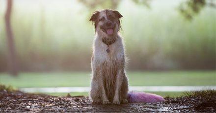Cette gentille chienne tient à sauver tous les vers de terre qu'elle croise lors de ses balades (Vidéo)