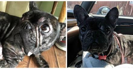Les volontaires trouvent deux chiens abandonnés, le vétérinaire leur fait une terrible annonce