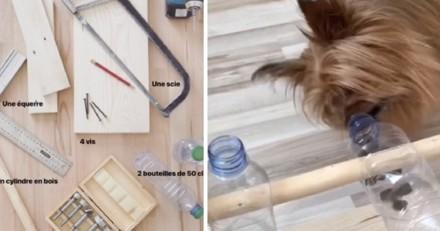 DIY : Voici comment fabriquer un distributeur de nourriture/friandises pour votre chien (Vidéo)