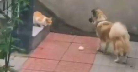 Le chat errant s'approche du chien qui mange : ce qui fait le toutou émeut 60 000 personnes (Vidéo)