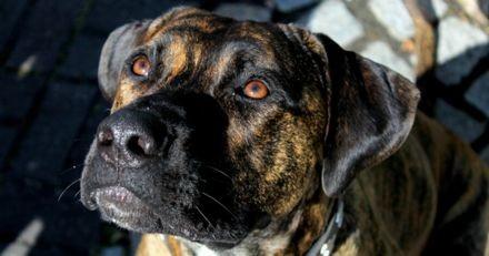 Il donne le petit déjeuner à son Pitbull : la réaction du chien surprend tout le monde ! (Vidéo)