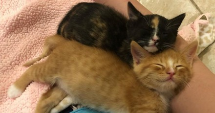 Ces chatons frère et sœur se gardent en sécurité en attendant les secours