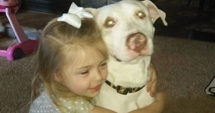 Une fillette pleure la disparition de son chien, sa vidéo devient virale… et elle retrouve son ami !