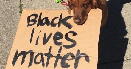 #BlackLivesMatter : ce chien marche avec sa maîtresse pour dénoncer la mort de George Floyd