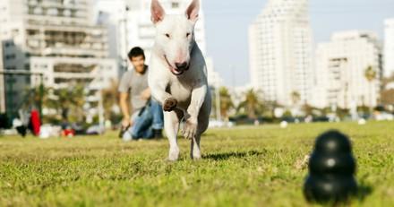 Il lance un jouet à son chien, quand il revient il explose de rire en voyant ce qu'il tient dans sa gueule