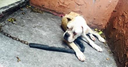 Elle voit une chienne attachée à une chaine et découvre en s'approchant la plus horrible des scènes