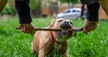Il égorge le chien dont il avait la garde : condamné à 1 an de prison avec sursis