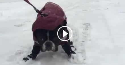 Roi de la glisse malgré lui, ce chien semble détester la neige comme personne… (Vidéo du jour)