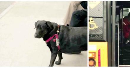 Cette chienne veut aller au parc mais son maître refuse, le bus arrive et l'impensable se produit (Vidéo)