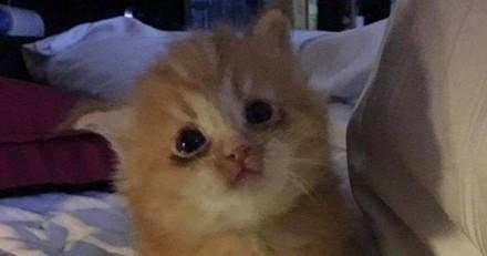 Ce chaton et sa maman ont perdu le seul foyer qu'ils connaissaient mais une famille d'accueil a tout changé