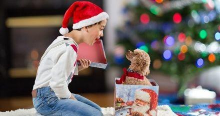 Offrir un chien ou chat à Noël ? Une fausse bonne idée !