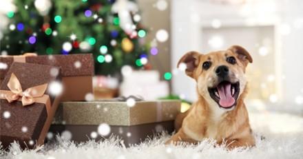 Noël 2018 : 5 idées de cadeaux à déposer sous le sapin pour votre chien !